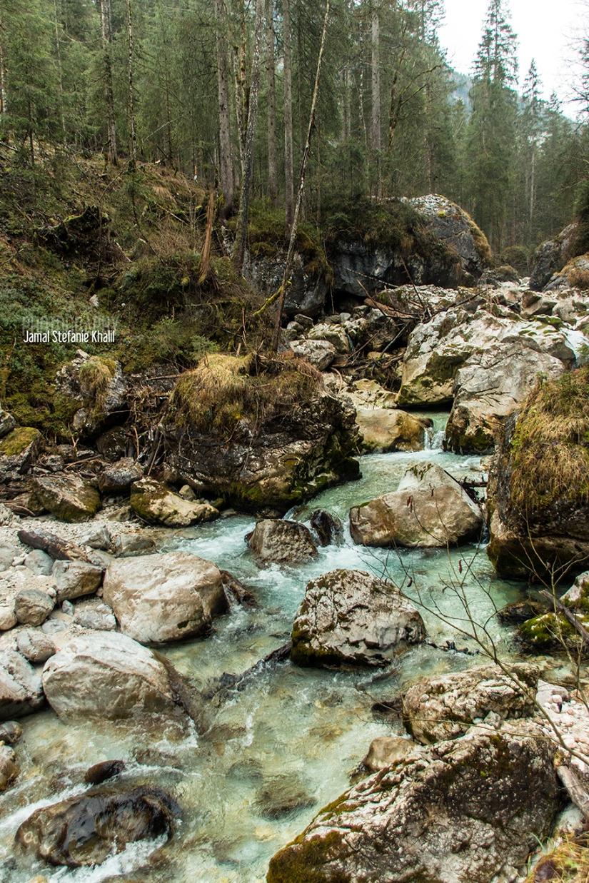 Zauberwald am Hintersee