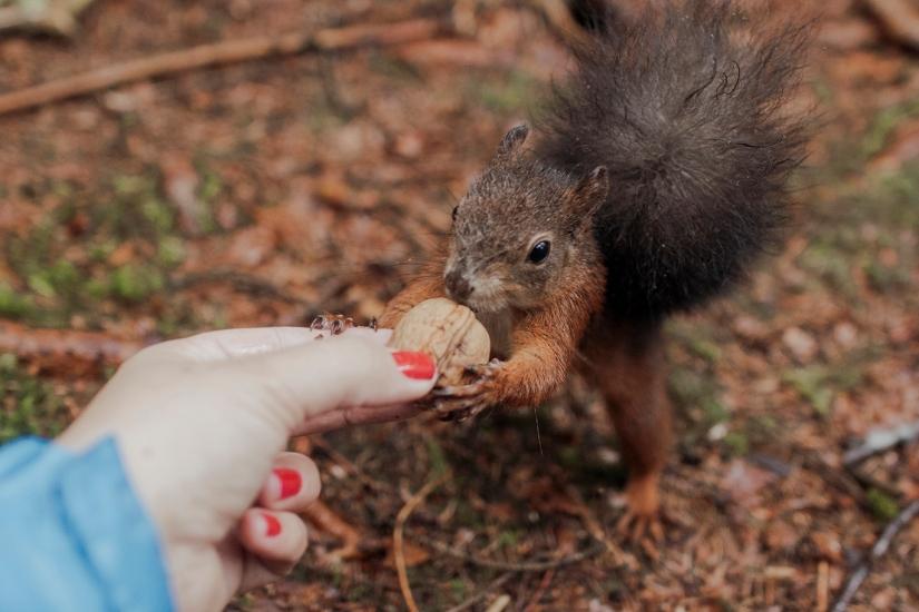 Alles für dieHörnchen